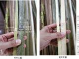 2公分竹片-06